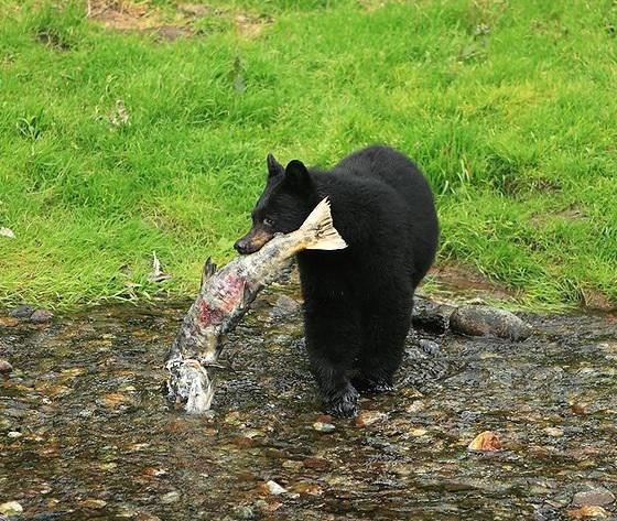 bear large