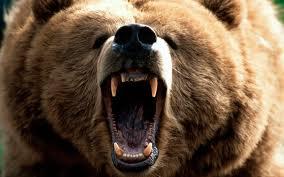 bearimages